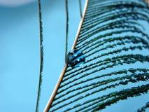 Veer met een blauwe daling Stock Afbeelding