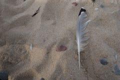 Veer op het zand Stock Foto's