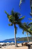 Veets, kokospalmen, blauwe hemel, overzees, blauwe hemel, rust royalty-vrije stock fotografie