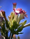 veg Royaltyfria Foton