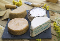 Vegan cheeses Royalty Free Stock Image