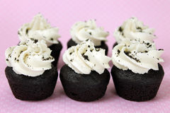 Vegan Cookies n Cream Mini Cupcakes. Closeup of Six Vegan Cookies n Cream Mini Cupcakes  on pink Stock Photography