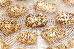 Vegan cookies are prepared on the dehydrator grid. Vegan cookies from wheat with wheat germ, raisins and sesame in preparing process on the dehydrator grid stock photo