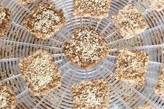 Vegan cookies are preparing on the dehydrator grid. Vegan cookies from wheat with wheat germ, raisins and sesame in preparing process on the dehydrator grid. Top stock images