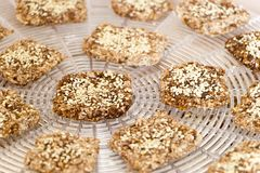 Vegan cookies preparing process on dehydrator grid. Sweety vegan cookies from wheat with wheat germ, raisins and sesame in preparing process on the dehydrator royalty free stock photos