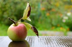 Vegan, mode de vie sain et concept de consommation Image libre de droits
