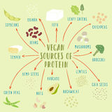 Vegan plant-based sources of protein vector illustration