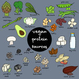 Vegan protein. Set of hand drawn vector illustration of best sources of protein for vegetarians. Great for vegetarian and healthy life concept. Infographics vector illustration