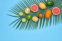 Tropical Palm Leaf, Fruits.Bright Summer Set.Vegan. Vegan. Tropical Colorful Summer Design Set. Palm Leaf and Fresh Fruits. Trendy Fashion concept. Flat lay royalty free stock image