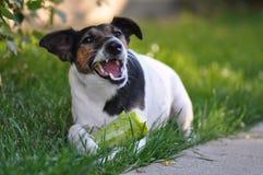 Veganisthond stock foto