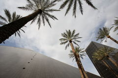 Vegas Buildings 1. Towering modern buildings viewed from below, framed by  with tall palm trees Stock Photo