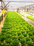 Vegatable Bauernhof Stockfotos