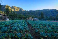 Vegatable plantacja w górze Bromo, Indonezja Obrazy Royalty Free