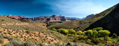 Vegatation в гранд-каньоне Стоковая Фотография RF