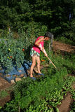 Vege patch. Woman working in her vegetable patch Stock Photos