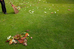 Vegende bladeren. Stock Afbeeldingen