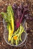 Veges orgánicos Foto de archivo libre de regalías