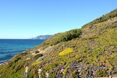 Vegetação ao longo da costa fotografia de stock royalty free