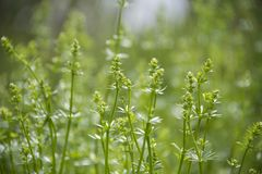 Vegetação crescente em um prado na mola adiantada imagens de stock royalty free