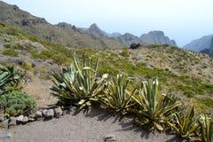 Vegetação crescida nas montanhas rochosas de Tenerife, Isla amarelo imagens de stock royalty free