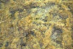 Vegetação da alga em água do mar movente Fotos de Stock