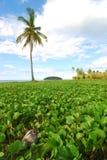 Vegetação da palmeira e da praia Fotos de Stock Royalty Free