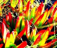 Vegetação da praia Foto de Stock