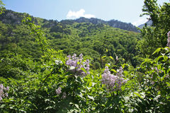 Vegetação de floresta rica da primavera Foto de Stock Royalty Free
