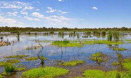 Vegetação de flutuação dos pantanais de Beelier, Austrália Ocidental Imagens de Stock Royalty Free