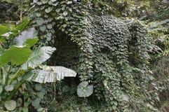 Vegetação de selva poderosa, os verdes variados das florestas Fotografia de Stock Royalty Free