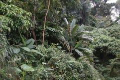 Vegetação de selva poderosa, os verdes variados das florestas Imagens de Stock