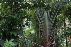 Vegetação de selva poderosa, os verdes variados das florestas Fotografia de Stock
