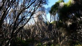 Vegetação desolada Austrália foto de stock