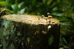 Vegetação diversa em Kinabalu NP, Sabah, Malásia foto de stock