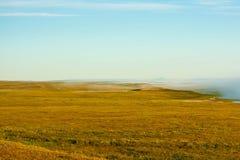 Vegetação do norte Imagem de Stock Royalty Free