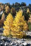 Vegetação do outono Foto de Stock Royalty Free