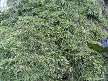 Vegetação do tronco de árvore Imagens de Stock Royalty Free