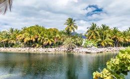 Vegetação do tubarão e água chaves, ilhas das chaves, FL - EUA Foto de Stock Royalty Free