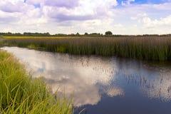 Vegetação do Waterside Imagem de Stock