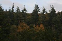 Vegetação e árvores Imagens de Stock