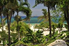 Vegetação e praia tropicais imagem de stock