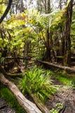 Vegetação em Havaí Fotos de Stock