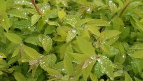 Vegetação fresca brilhante verde com gotas de orvalho vídeos de arquivo