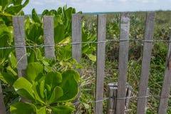 Vegetação litoral de Florida Foto de Stock