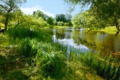Vegetação luxúria do verão por uma lagoa imagem de stock
