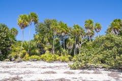 Vegetação luxúria na praia natural nos Tropes imagens de stock