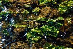 Vegetação na água fotografia de stock