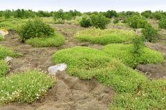 Vegetação na paisagem litoral fotografia de stock