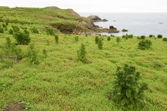 Vegetação na paisagem litoral imagens de stock