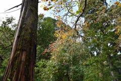Vegetação nas cores bonitas da floresta foto de stock